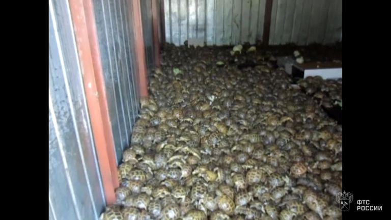 The tortoises were put into sacks and hidden with several tonnes of cabbages. The value was estimated at £62,000