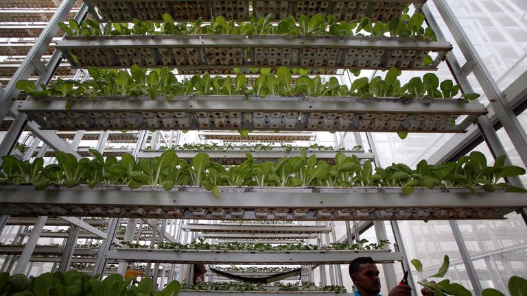 Vertical farming has taken off in Asia