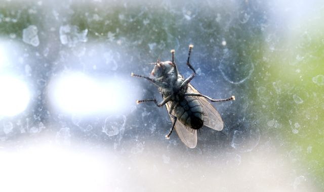 Swarms of flies from steelworks plague residents in Cardiff