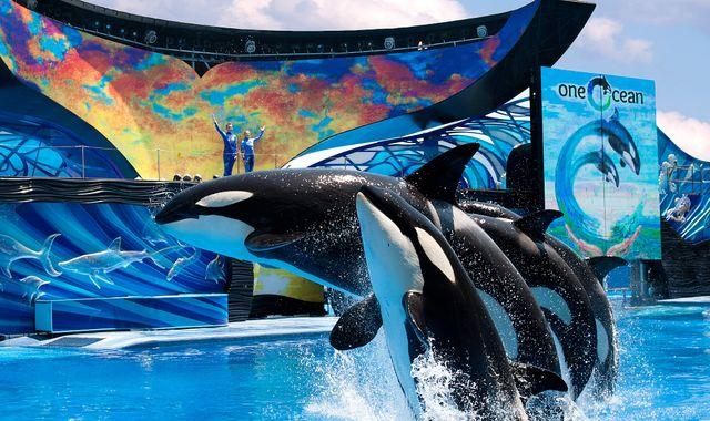 SeaWorld hits back at Sir Richard Branson as Virgin stops selling park tickets