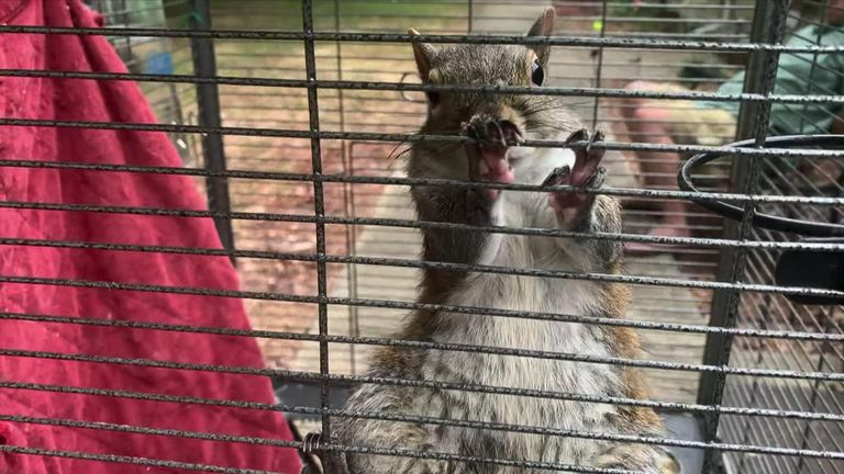 The Alabama attack squirrel was allegedly fed drugs by its owner