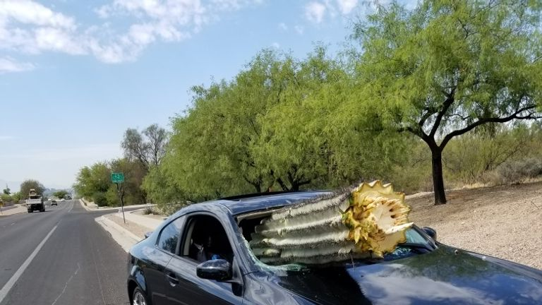 The windshield was pierced with a saguaro cactus
