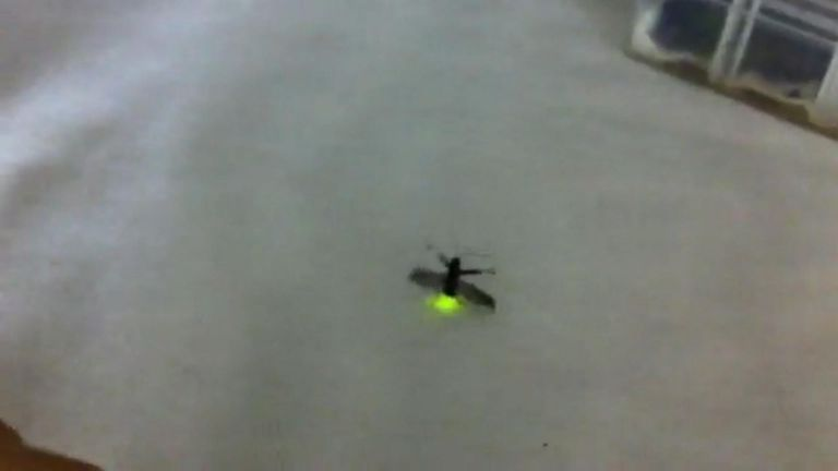 Scientists discover new Chinese firefly species