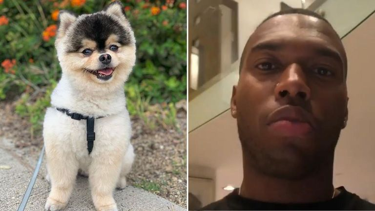 'I want my dog back man,' said Sturridge. Pic: Daniel Sturridge