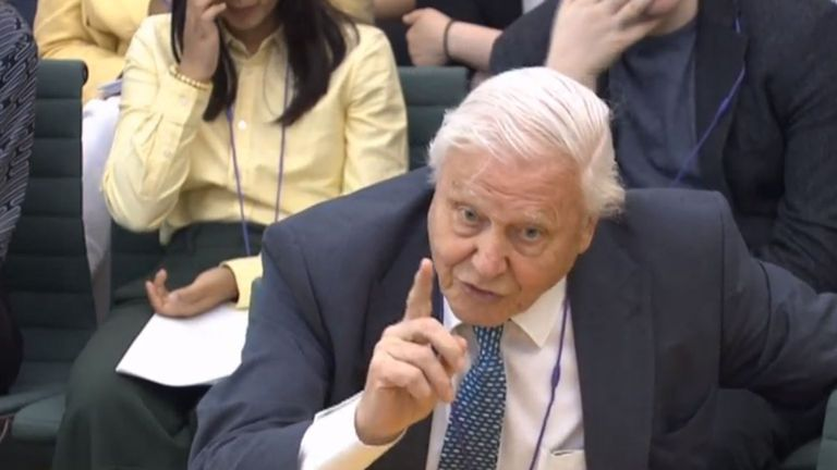 Sir David said animals were being 'strangled' by plastic in the sea