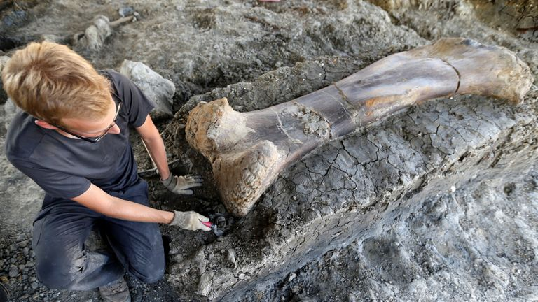 Giant dinosaur bone discovered in southwestern France