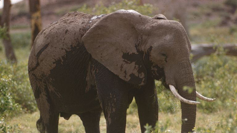 A woman was jailed for 15 years for poaching