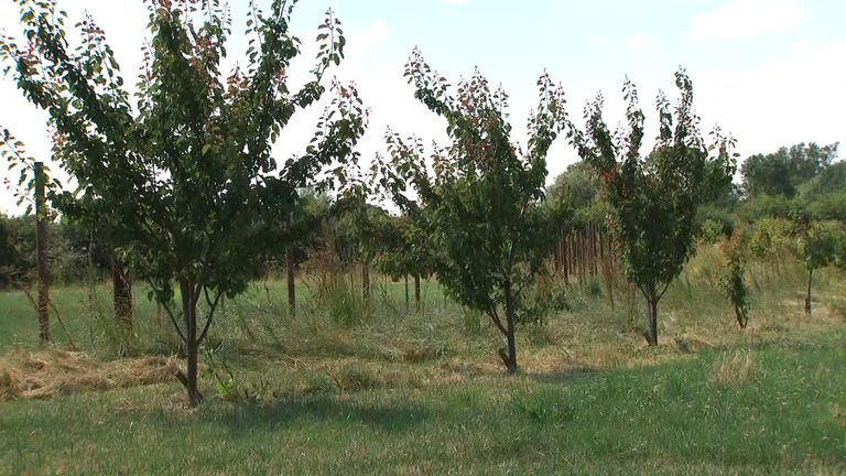 Agro-forestry, planting fields with some woodland, could actually increase production
