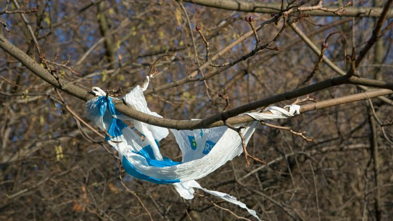 Plastic bag hanging from a twig. (Photo by Sally-Ann Norman/Construction Photography/Avalon/Getty Images)