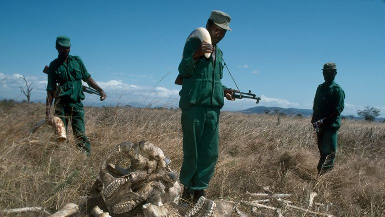 Demand for ivory in Asia triggered rampant poaching in Tanzania