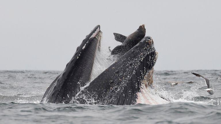 Whale. Pic: Magnus News Agency/ Chase Dekker