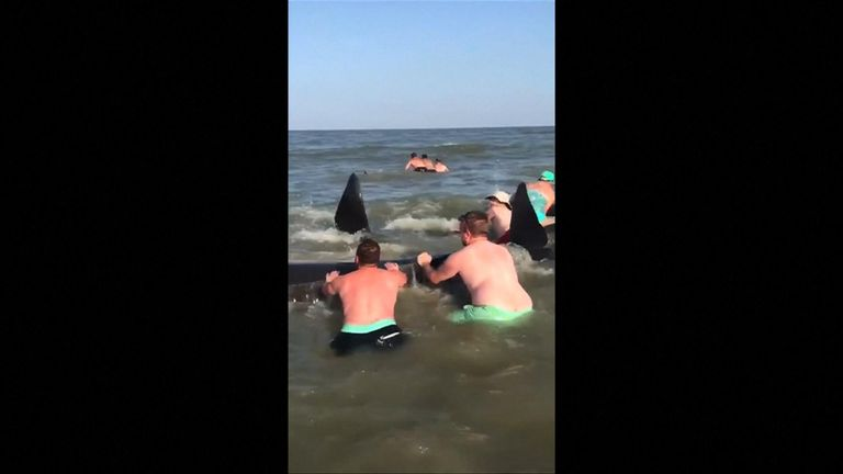 A pod of whales were rescued by holidaymakers after they became stranded on a beach on St Simons Island in the United States.