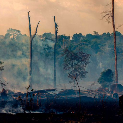 Amazon wildfires: Full scale of devastation hard to know