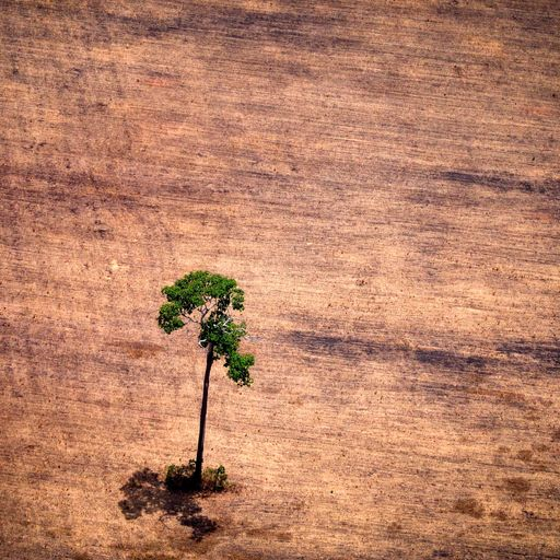 Brazil deforestation at highest rate for four years