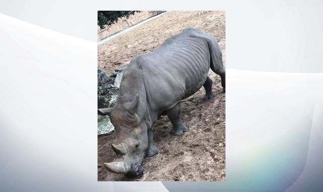 French zoo visitors scratch names into rhino's back