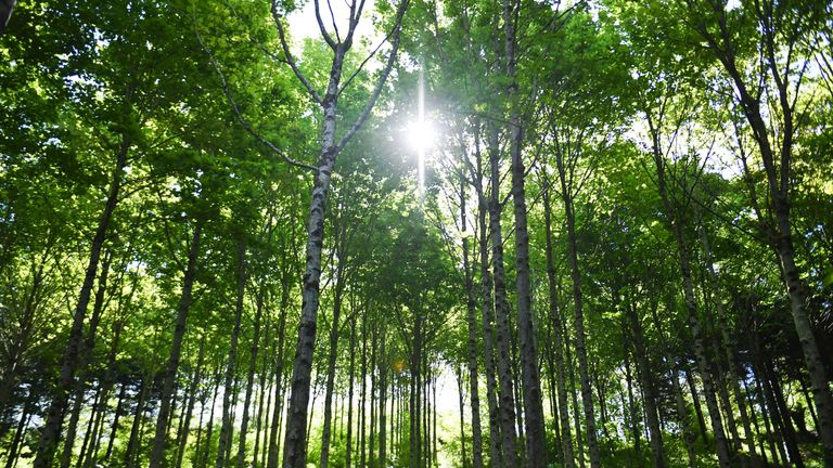 "This picture taken on May 14, 2019 shows the forest of Pleyben, Brittany, owned by French start-up EcoTree. - Launched near Brest in 2016, the company buys forests all over France to restore them, implementing a ""forestry close to nature"", then sell trees by the unit. It also bought farmland to reforest and promise for each tree sold, to replant three. (Photo by Fred TANNEAU / AFP)        (Photo credit should read FRED TANNEAU/AFP/Getty Images)"
