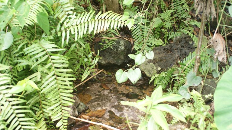One of the nests constructed by the goliath frog. Pic: Marvin Schäfer