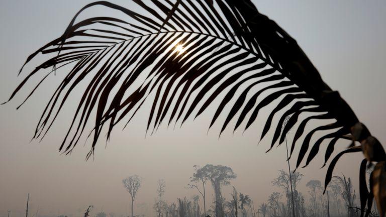 burning tract of the Amazon jungle in Porto Velho, Brazil August 25, 2019. REUTERS/Ricardo Moraes