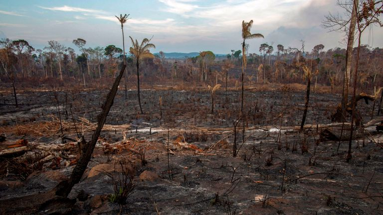 View of a burnt area after a fire in the Amazon rainforest near Novo Progresso, Para state, Brazil