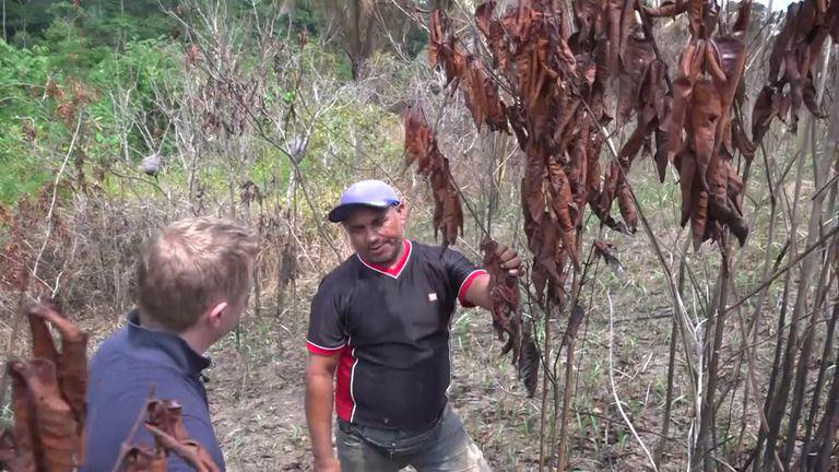 Raimundo Nonato Apurina says te fires are set to drive them off the land