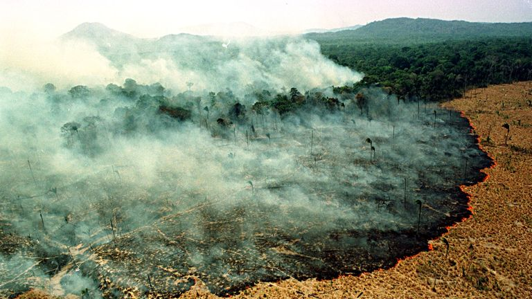 Fire destroys a forest in Apiau, 120kms (74 miles) from Boa Vista, capital of the state of Roraima