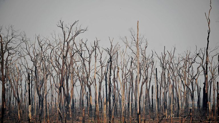 Burnt areas of the Amazon rainforest, near Abuna, Rondonia state