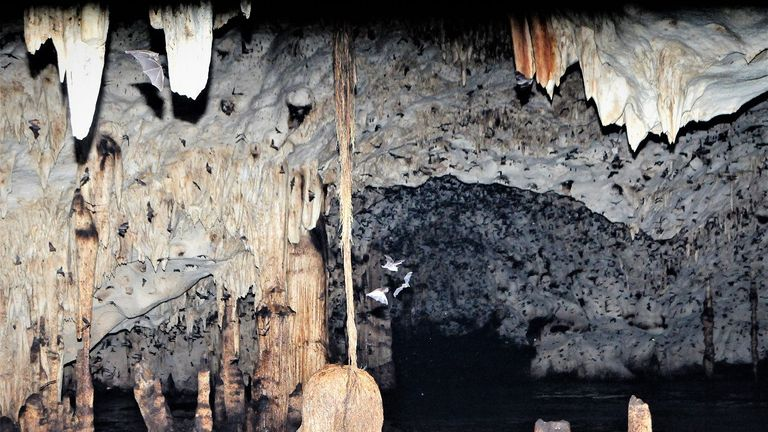 The funnel-eared bats live in hot caves