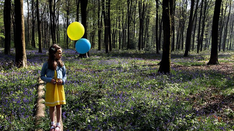 Eight-year-old Daisy holds her birthday balloons while looking at a bluebell glade, in Micheldever Wood, near Basingstoke in Hampshire, on April 19, 2011