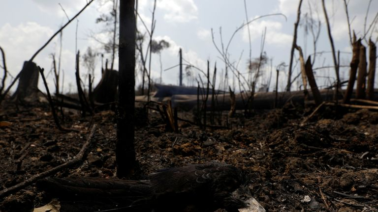 A dead bird is pictured at a burning tract of the Amazon jungle in Porto Velho, Brazil August 25, 2019. REUTERS/Ricardo Moraes