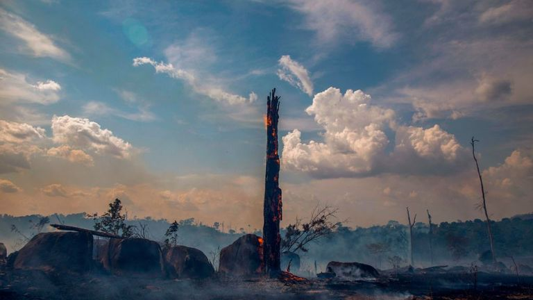 The remains of a tree after wildfires in Altamira, in Brazil's Para state