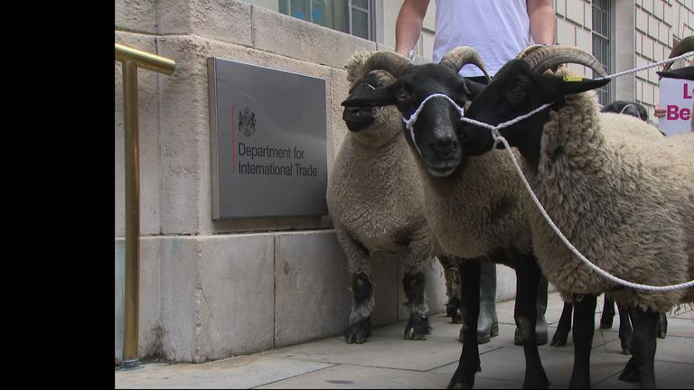 Six sheep were led past Defra by the People's Vote campaign group during the launch of the Farmers For A People's Vote group