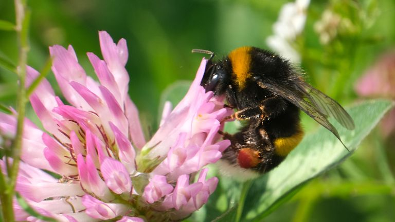 More than 80% of children did not know what a bumblebee looked like