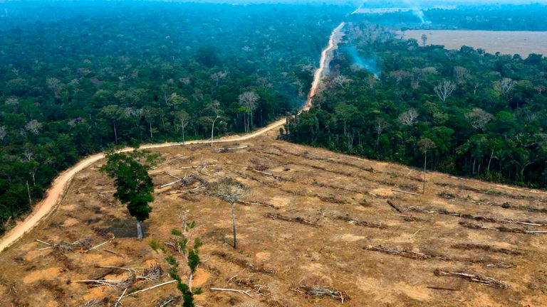 Burnt area of Amazon forest