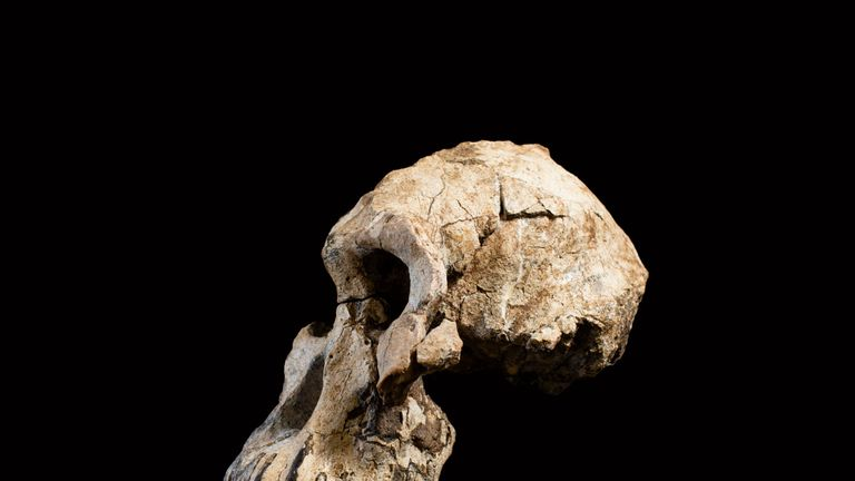 The skill is millions of years old. Pic: Cleveland Museum of Natural History