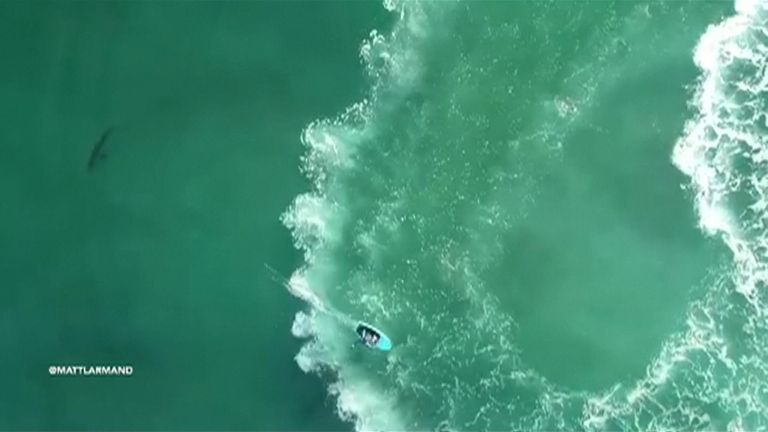 Two hydrofoil surfers and a jet-skier came within a few feet to a few yards from a juvenile great white shark