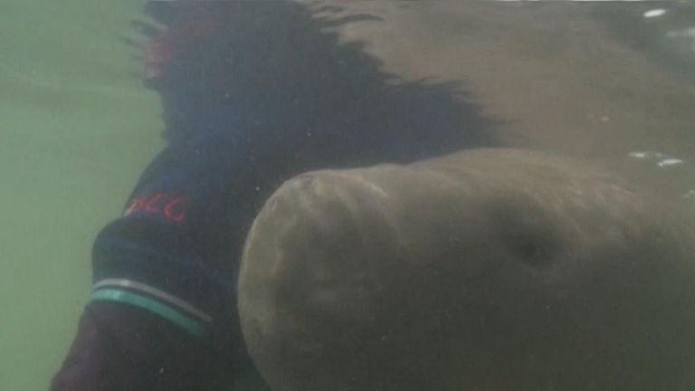 Marium the dugong dies and is found to have ingested plastic waste