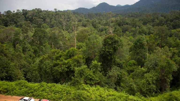 East Kalimantan location was once almost covered completely by rainforests
