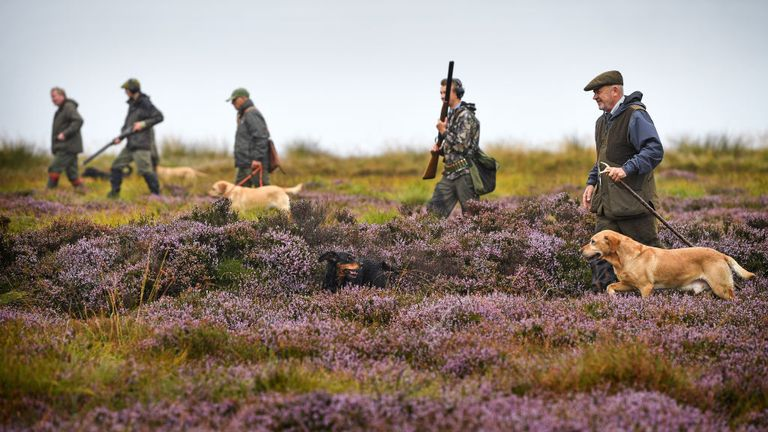 Hunters looking for grouse last year on Forneth Moor