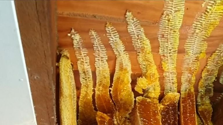 Woman has 50kg of honeycomb, with 60,000 bees, removed from her ceiling