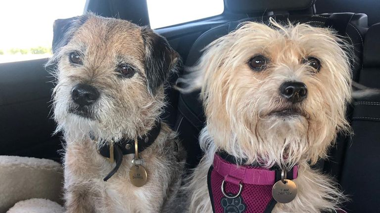 Kate Lawler and her fiance Martin have launched the Maybe Baby podcast. Here are their two dogs, Baxter and Shirley