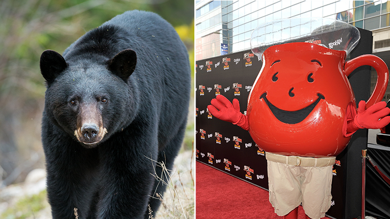 The police say the bear left the building 'like the Kool-Aid man'
