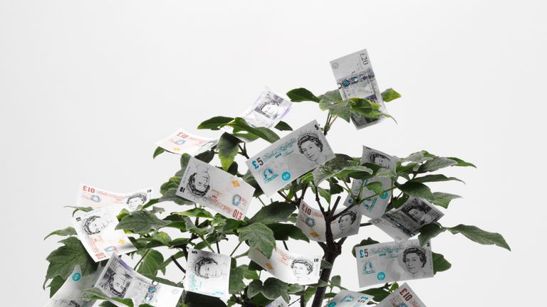 """Five,ten and twenty pound notes growing on a tree.Click on the link below to see more of my business images."""