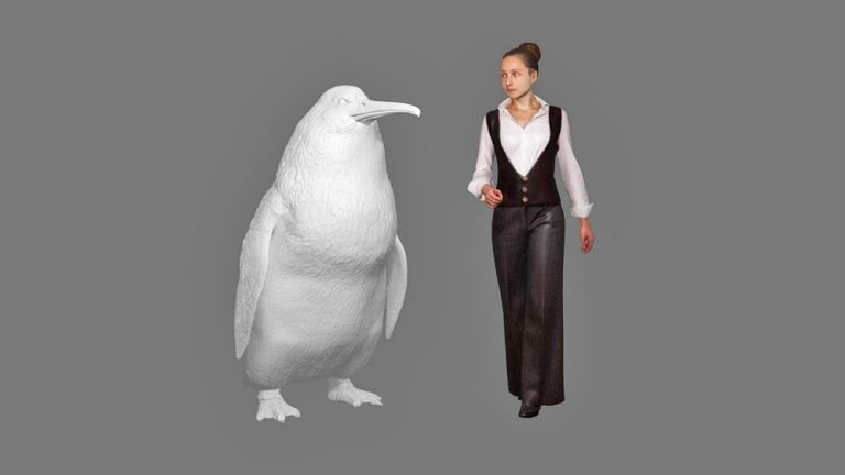 A new species of giant penguin has been discovered. Pic: Canterbury Museum