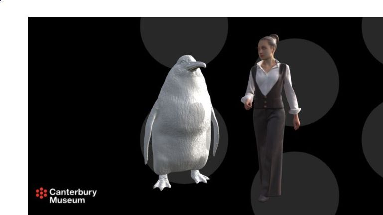 The ancient penguin stood at 1.6m. Pic: Canterbury Museum