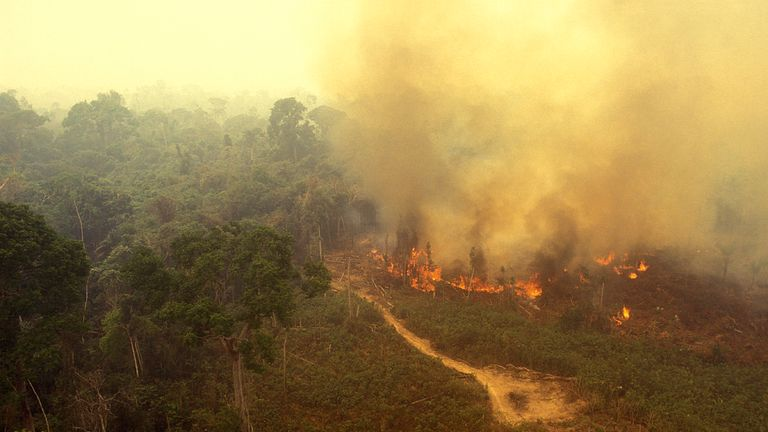 Aerial view of a fire in the rainforest.
