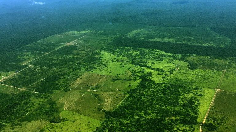 Special report: New Climate - Amazon rainforest 'in crisis'