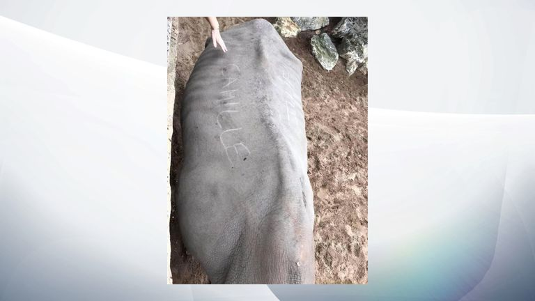 A rhino who had two zoo visitors' named scratched onto its back. Pic: Royan News