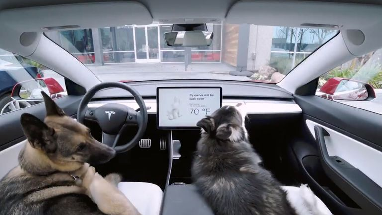 Dog Mode keeps air conditioning on so pets don't overheat in cars. Pic: @Tesla