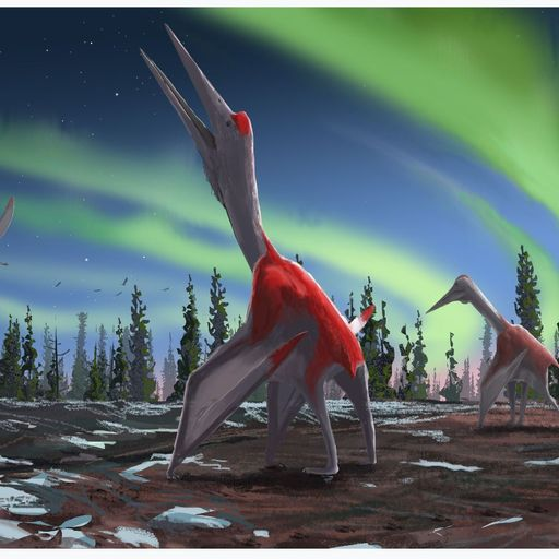 Newly classified pterosaur was one of history's largest flying animals