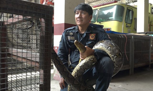 As snake intrusions soar in Bangkok, it's this man's job to catch them